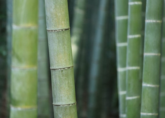 Bamboo Project